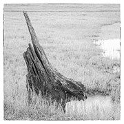 Black And White Rural Photography Prints - Stump Print by Setsiri Silapasuwanchai