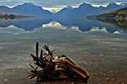 Lake Mcdonald Framed Prints - Stumped Framed Print by Adam Jewell