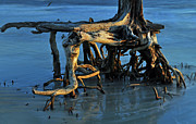 Beach Photographs Art - Stumps in the Ocean 1.2 by Bruce Gourley