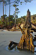 Beach Photographs Art - Stumps on the Beach 1.3 by Bruce Gourley