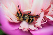 Nobility Photos - Stung by a Bed of Flowers by Jenny Rainbow