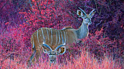 Game Animal Prints - Styled Environment- Modern Kudus Print by Douglas Barnard