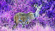 Game Animal Prints - Styled Environment- Modern Kudus V2 Print by Douglas Barnard