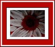 Unreal Prints - Stylized Daisy with Red Border Print by Barbara Griffin