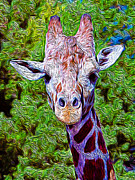 Fauna Mixed Media Metal Prints - Stylized Giraffe Metal Print by Jacqueline Barden