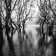 Scotland Prints Prints - Submerging Trees Print by John Farnan