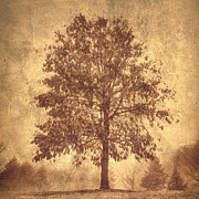 Photo Manipulation Photo Framed Prints - Suburban Tree Framed Print by Chris Scroggins