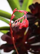 Xueling Zou - Succulent 2