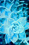 Sandy Moulder - Succulent Blue