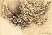 Succulent Flowers Print by Judith Chantler