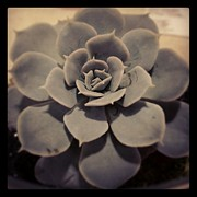 Heather Giltner - Succulent