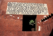 Arequipa Prints - Succulent in window Print by James Brunker