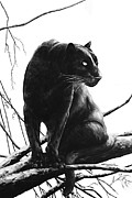 Black Leopard Framed Prints - Suddenly Framed Print by DiDi Higginbotham