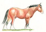 Nag Paintings - Suffolk Punch Horse by Stuart Fowle