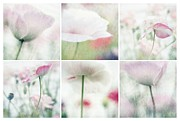 Lensbaby Close-up Posters - Suffused With Light Collage Poster by Priska Wettstein