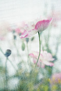 Lensbaby Framed Prints - suffused with light III Framed Print by Priska Wettstein