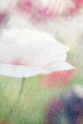 Lensbaby Macro Posters - suffused with light VI Poster by Priska Wettstein