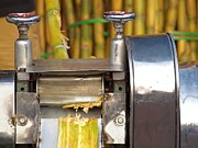 Yali Shi - Sugar Cane Juice Press
