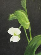 White Blossoms Paintings - Sugar Snap Blossom by Maureen Hargrove