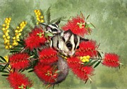 Bottle Brush Metal Prints - Sugar Sugar Metal Print by Trudi Simmonds