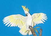 Shirley Mixed Media - Sulphur Crested Cockatoo by Shirley Dawson