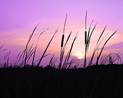 Cattails Photos - Sultry Sunset by Al Powell Photography USA