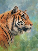 Lion Oil Paintings - Sumatran Tiger by David Stribbling