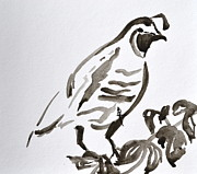 California Quail Paintings - Sumi-e Quail by Beverley Harper Tinsley