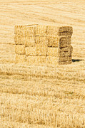 Clint Brewer - Summer Bales