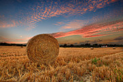 Pete Reynolds - Summer Bales