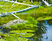 Beaver Digital Art - Summer Beaver Pond by L J Oakes