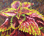 Life Greeting Cards Painting Originals - Summer Coleus by Kristos Raftopoulos