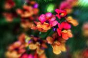 Kasia Dixon - Summer Colours