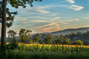New England Sunset Photos - Summer Corn by Bill  Wakeley