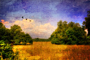 Agriculture Digital Art - Summer Country Landscape by Lois Bryan