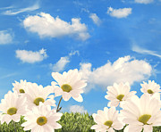 Daisies Prints - Summer Daisies Print by Christopher Elwell and Amanda Haselock