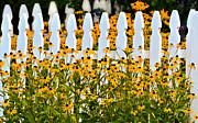 Susan Leggett - Summer Daisies