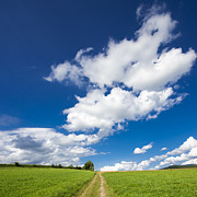 Fresh Green Art - Summer day blue sky green grass by Matthias Hauser