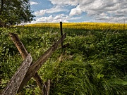 Fence Art - Summer day by Davorin Mance