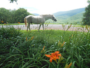 Paso Fino Horse Photos - Summer Day Memories with The Paso Fino Stallion by Patricia Keller