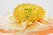Angela Doelling AD DESIGN Photo and PhotoArt - Summer Dream