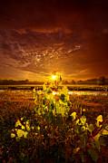Phil Koch - Summer Dreams Drifting...