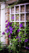 Clematis Framed Prints - Summer English Garden Framed Print by Julie Palencia