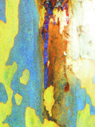 Colored Bark Posters - Summer Eucalypt Abstract 5 Poster by Margaret Saheed