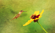 Floral Hummingbird Posters - Summer Flight Poster by Darren Fisher