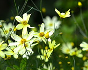 Corinne Rhode - Summer Flowers