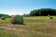 Crop Painting Prints - Summer Hay Print by Terry Reynoldson