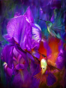 Print Of Irises Prints - Summer Hummers Print by Carol Cavalaris