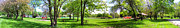 Park Scene Digital Art Prints - Summer In The Park Panorama Print by Thomas Woolworth