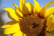 Linda Knorr Shafer - Summer Love
